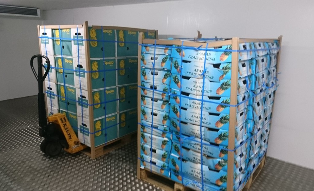 The first pallets of pineapple stored in the solar cold room